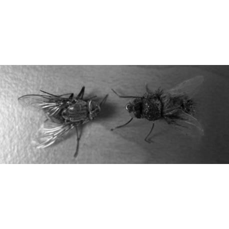 Курс по връзване на мухи - 1 час